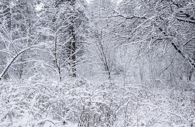 Bella strada bianca come la neve della foresta invernale innevata con una pista da sci coperta di neve alberi e cespugli