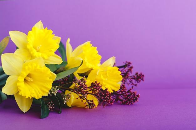Bella primavera bouquet di fiori giallo narciso su sfondo viola lilla con posto per il testo.