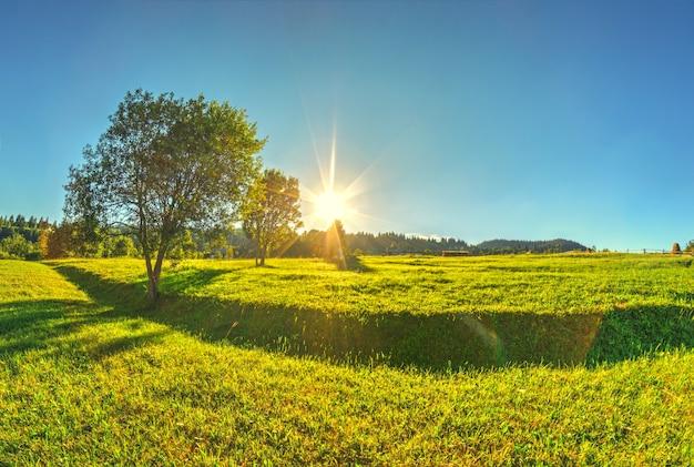 Un bellissimo paesaggio primaverile con un'erba verde fresca e alberi nella campagna montuosa alpina con cielo azzurro e sole splendente.