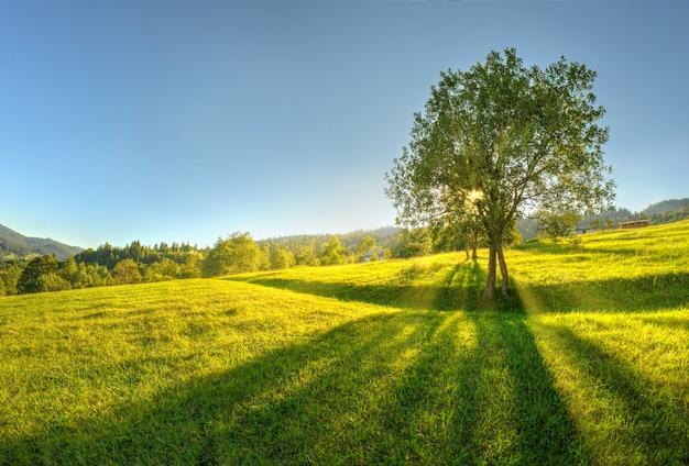 Un bellissimo paesaggio primaverile con un'erba verde lussureggiante e un singolo albero nella campagna alpina montagnosa alla luce dell'alba.