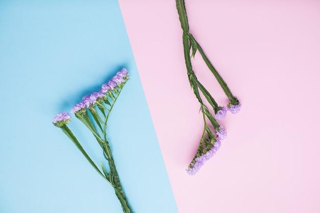 Bella statica su sfondi di carta multicolore con spazio di copia. primavera, estate, fiori, concetto di colore. consegna dei fiori