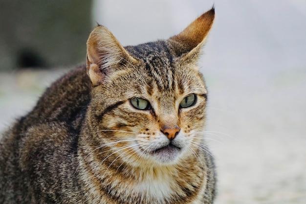 Bellissimo gatto randagio per strada