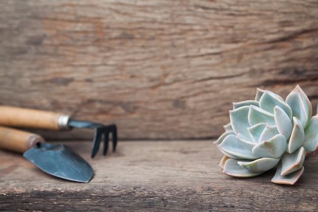 Bello succulente e strumenti di giardino sul fondo di legno di lerciume