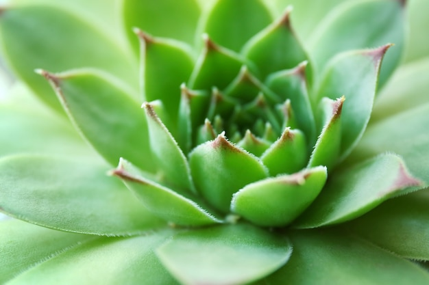 Bella pianta succulenta da vicino