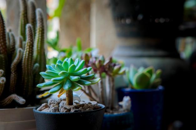 Bella piantagione succulenta nel piccolo giardino