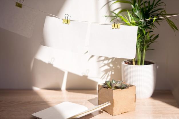 Bellissime piante succulente in eleganti vasi da fiori su armadietti in legno contro
