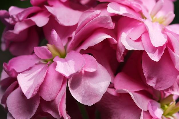 Bellissimi fiori estivi su un'aiuola da giardino ripresa ravvicinata in una luminosa giornata di sole estivo