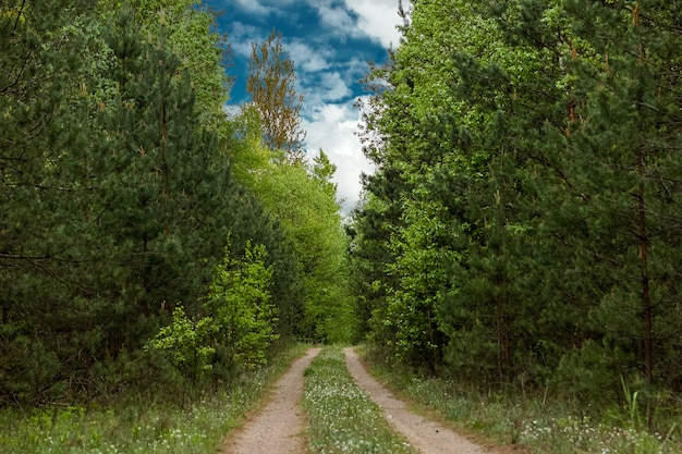 Bella estate paesaggio verde foresta e strada nella foresta.