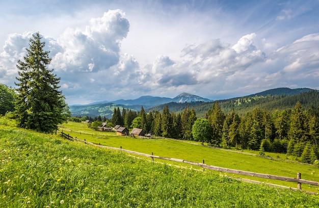 Bellissimo paesaggio estivo di un prato verde su una collina che domina una fitta foresta di conifere