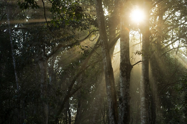 Splendidi raggi di sole che brillano tra gli alberi al mattino