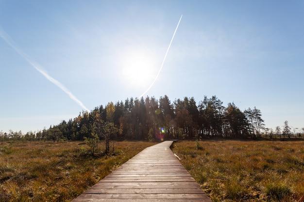 Bellissimo paesaggio soleggiato con il sentiero in legno che conduce alla pineta all'orizzonte.