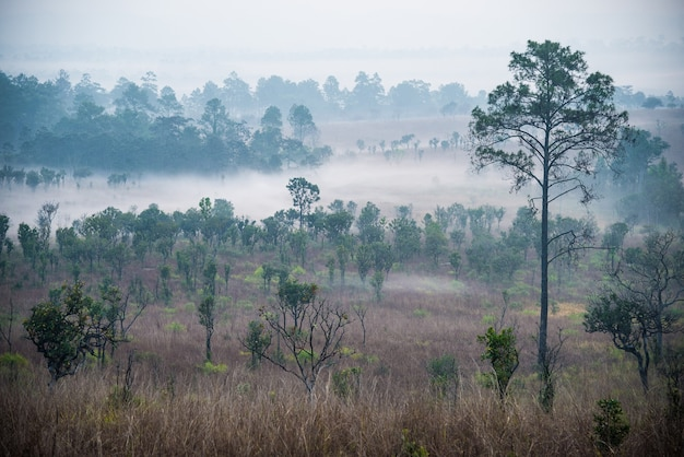 Bellissima alba e nuvole di nebbia nella foresta a thung salaeng luang national parkthailandia