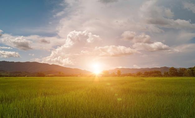 Bellissima alba sulle montagne e sul campo di riso verde. paesaggio di campagna in thailandia