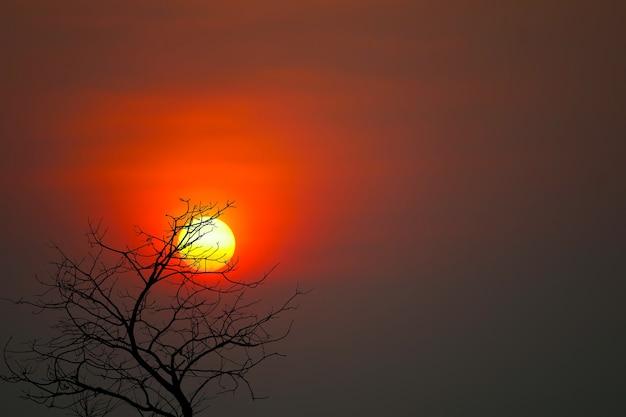 Alberi asciutti della bella sagoma posteriore del tramonto nel cielo rosso scuro di notte