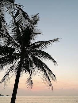 Splendida vista al tramonto o all'alba con cielo azzurro, palme tropicali e mare o oceano