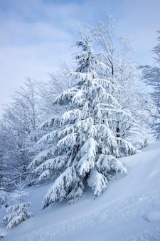 Bellissimo albero ricoperto da uno spesso strato di neve. albero cresce su un pendio in alta montagna. paesaggio invernale.