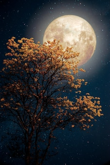 Bellissimo fiore giallo albero fiore con stella di latte modo nel cielo notturno luna piena - retrò opere d'arte di fantasia con tono di colore vintage.
