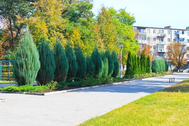 Bellissimi alberi nel parco cittadino