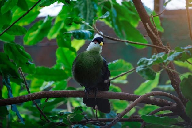 Bellissimo uccello tropicale con una testa bianca nel parco
