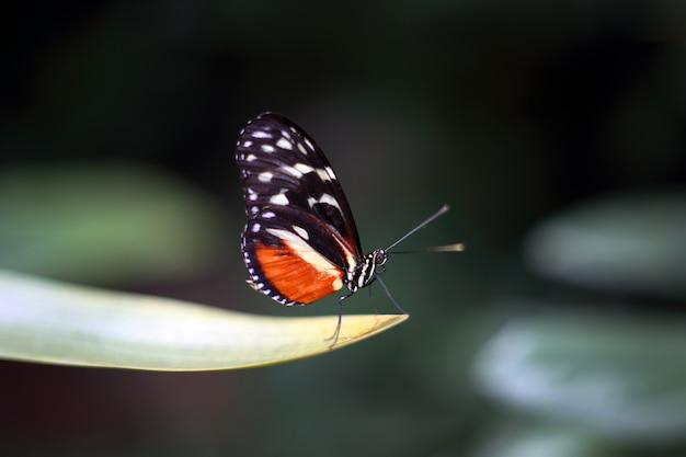Bella farfalla tropicale su sfondo sfocato natura