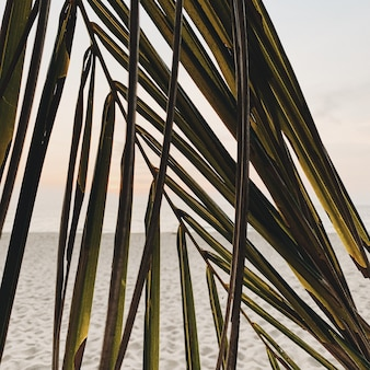 Bellissimo ramo di palma da cocco tropicale contro il tramonto colorato con il mare e il costo con sabbia bianca. modello minimalista e con colori caldi retrò e vintage