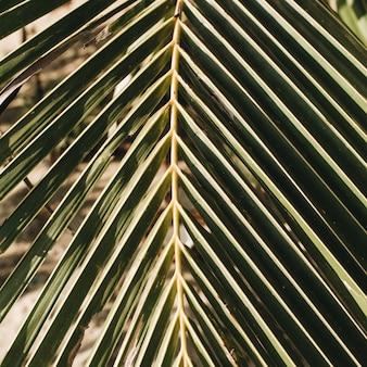 Bellissimo ramo di palma da cocco tropicale. motivo minimalista e stampa