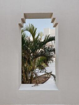 Belle foglie di palma tropicale nella finestra dell'edificio beige beige