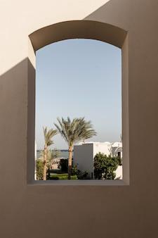 Bellissimo albero di piante tropicali nella finestra dell'edificio beige con ombre di luce solare.