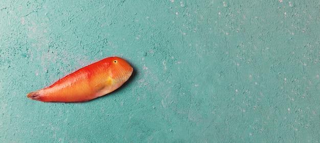 Bello pesce tropicale del mar rosso razorfish madreperlaceo su un fondo di colore turchese o tiffany. xyrichtys novacula. composizione di pesce
