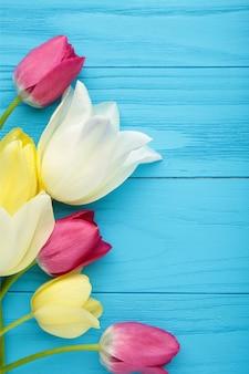 Bei tulipani sulla superficie blu con lo spazio della copia