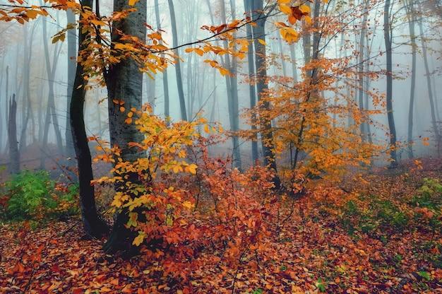 Bella vista della foresta nebbiosa con foglie d'oro in autunno montagne
