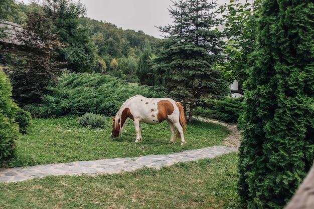 Bella vista di un cavallo che pasce erba nel giardino