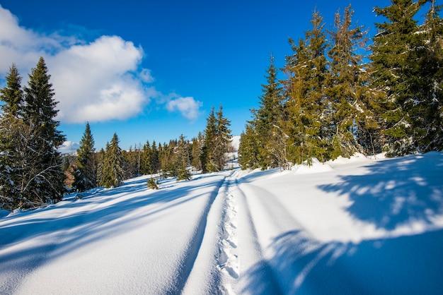 Splendida vista di maestosi alberi di abete rosso che crescono su una collina in cumuli di neve invernali contro un cielo blu e nuvole bianche in una soleggiata giornata invernale gelida