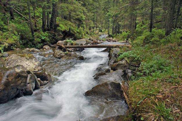 Bella vista sul fiume di montagna in estate