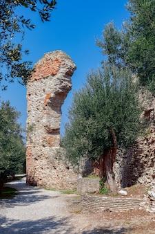 Bella vista di un vecchio ulivo circondato da un antico arco romano in rovina in italia