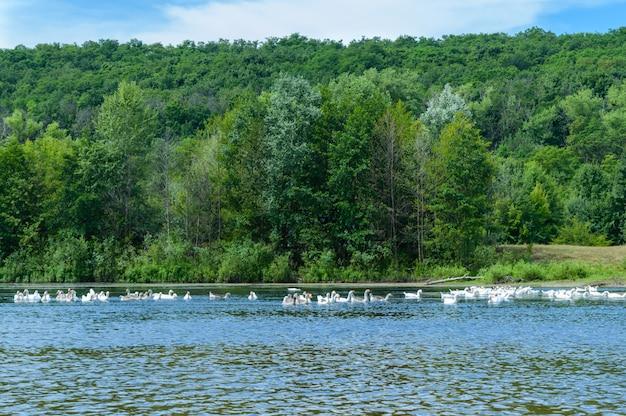 Splendida vista sul fiume. sulle rive di una foresta verde.