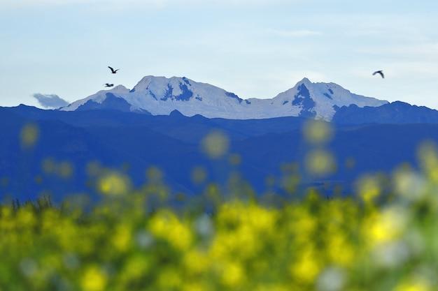 Bella vista di huaytapallana nevoso con fiori gialli in primo piano
