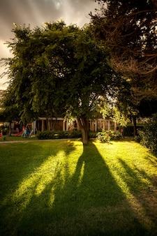 Bella vista del sole che splende attraverso il grande albero lussureggiante al parco