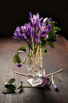 Bellissimi fiori viola croco in vaso in primavera