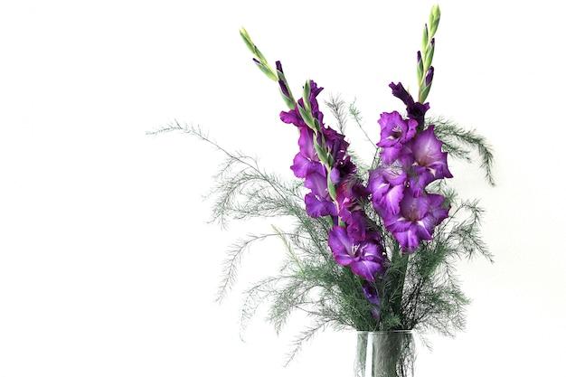 Bellissimi fiori di gladiolo viola