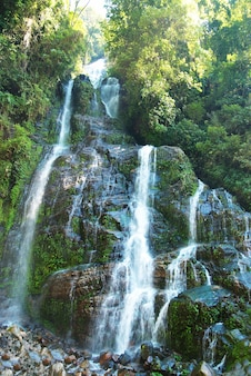 Bella cascata nella foresta circondata da alberi verdi
