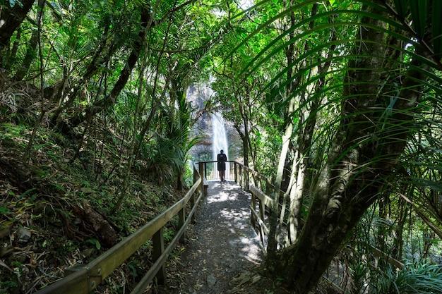 Bella cascata nella foresta pluviale verde, nuova zelanda