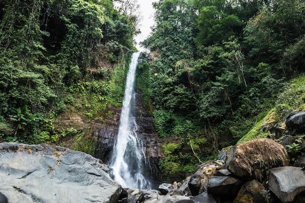 Bella cascata nella foresta pluviale, bali, ubud