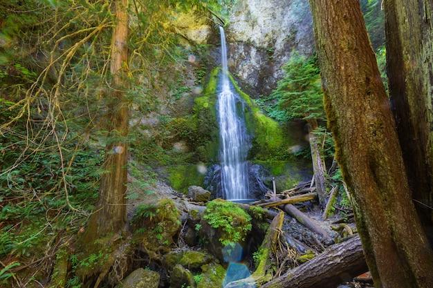 Bella cascata nell'isola di vancouver, canada