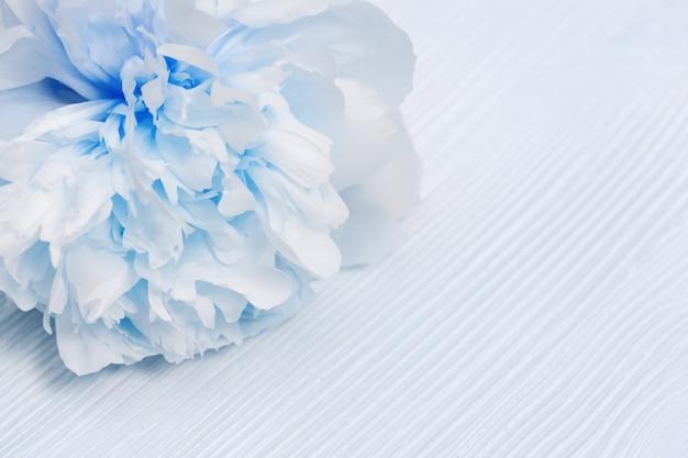 Bella peonia blu bianca su superficie di legno. messa a fuoco selettiva morbida.