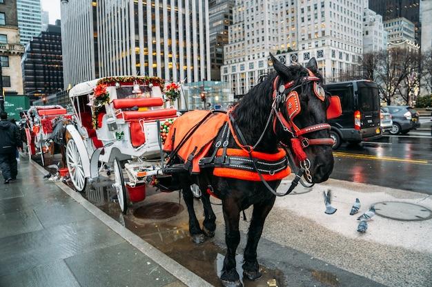 Bella carrozza bianca trainata da un grande cavallo nero con decorazioni natalizie a new york