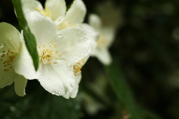 Bellissimo fiore bianco su sfondo verde natura