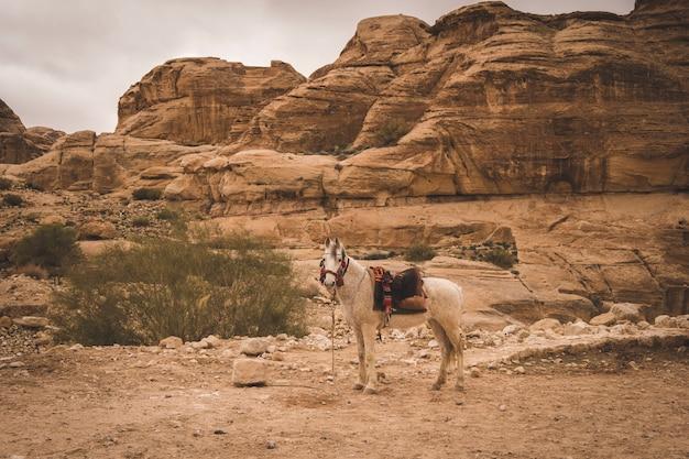 Bellissimo cavallo bianco nella cintura nazionale dei beduini contro le rocce della città antica