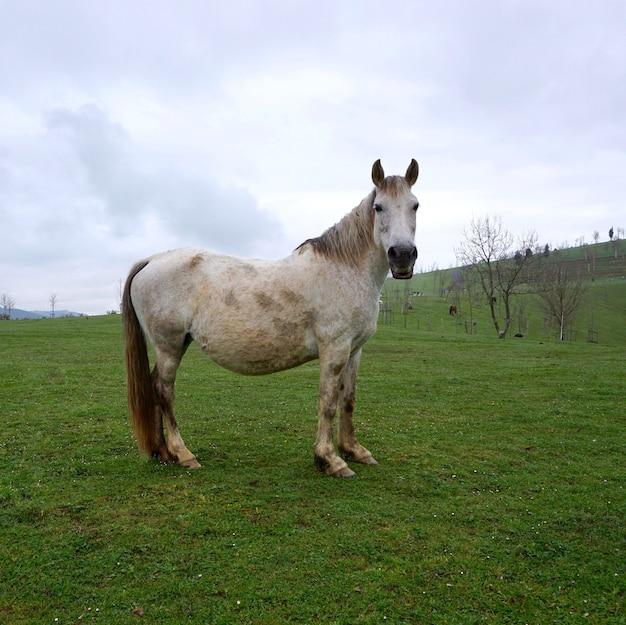 Bellissimo ritratto di cavallo bianco nella natura