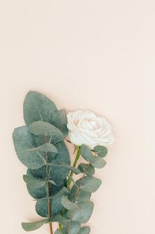 Bella rosa bianca fiore con rami di eucalipto su sfondo floreale di vacanza rosa pastello.